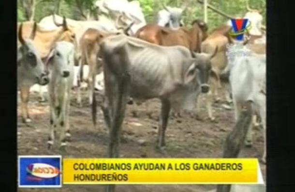Colombia apoya a Honduras en la reactivación ganadera