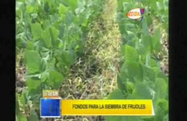 Agricultura asegura que hay fondos para sembrar frijol