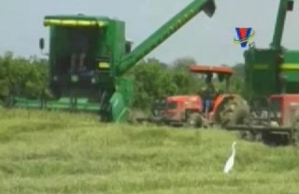 Productores de arroz reclamaron por pérdidas económicas