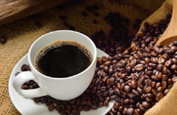 8.5 millones de quintales de café se proyectan cosechar