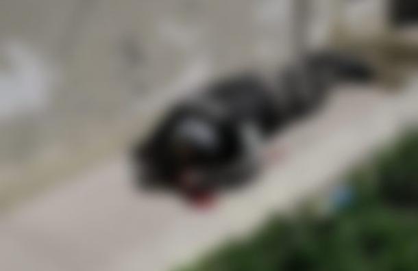 Asesinan a tres policias militares en El Progreso