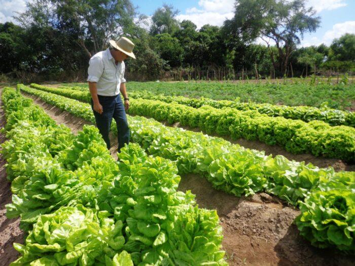 Agrocrédito para beneficiar hondureños en préstamos