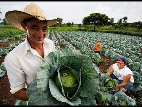Agrocrédito 5.0 Honduras